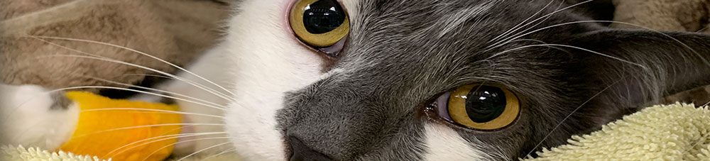 Veterinary Career Opportunities in Decatur: Close-Up of Cat's Eyes